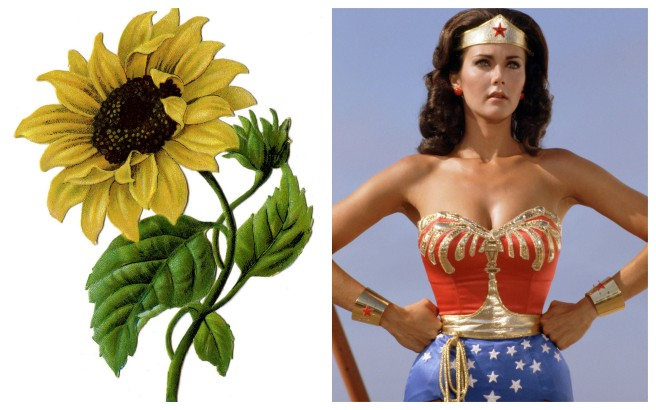 sunflower wonder woman